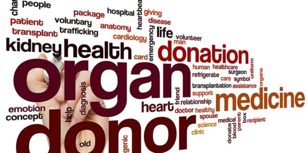 AdobeStock_86928428organ-donation